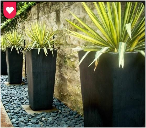 Quelle plante se trouve dans ces pots? Sans_t10
