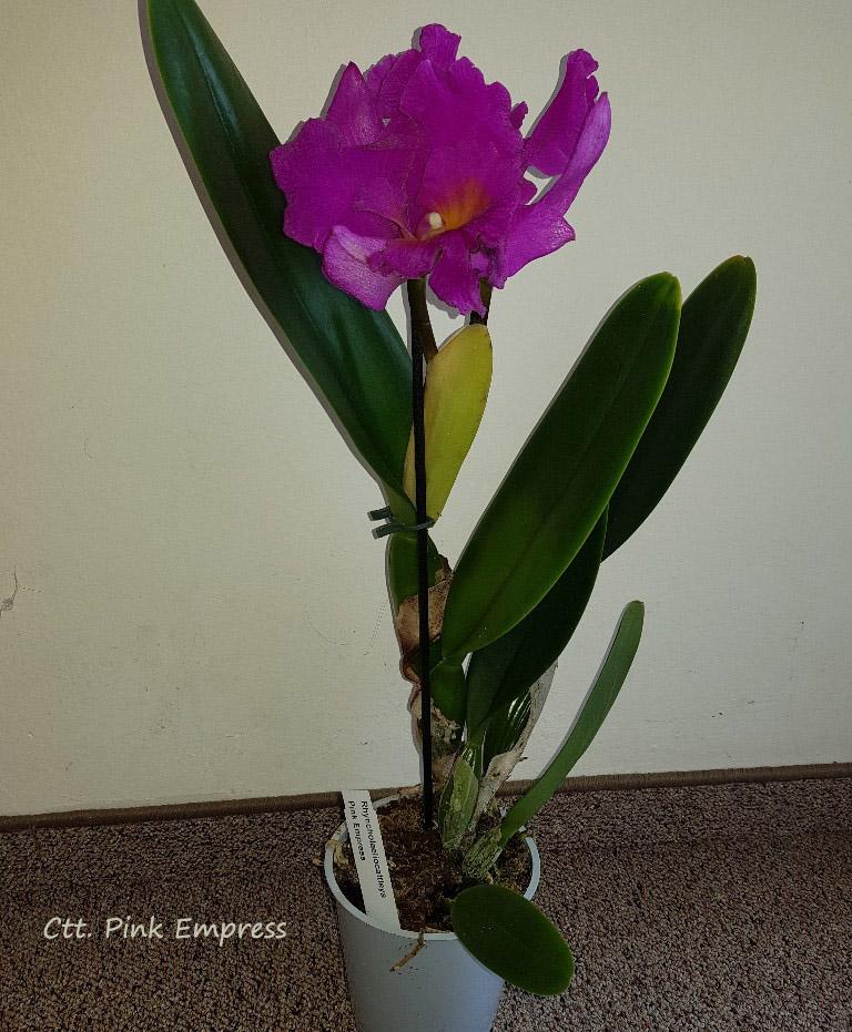 Orchideen-Neuzugang 2 - Seite 28 20200215