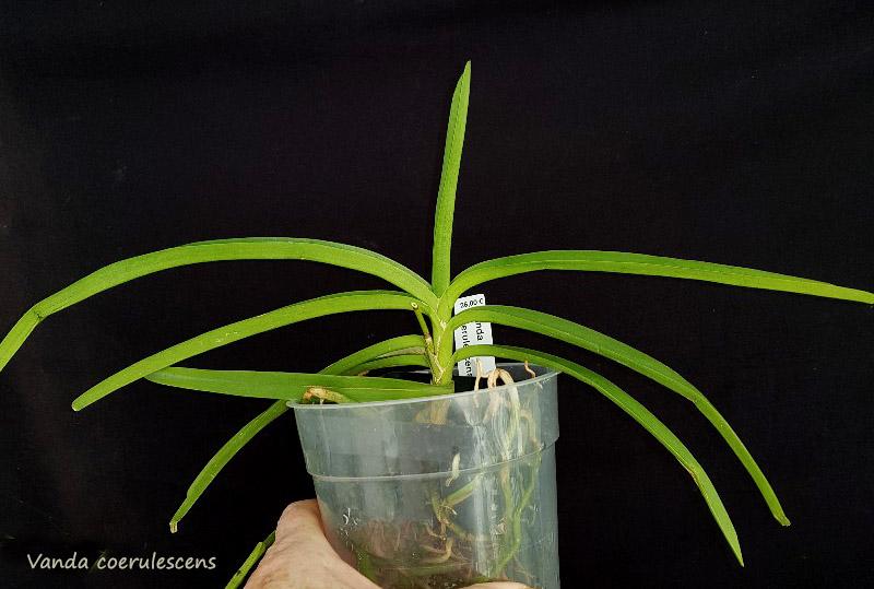 Orchideen-Neuzugang 2 - Seite 28 20200216