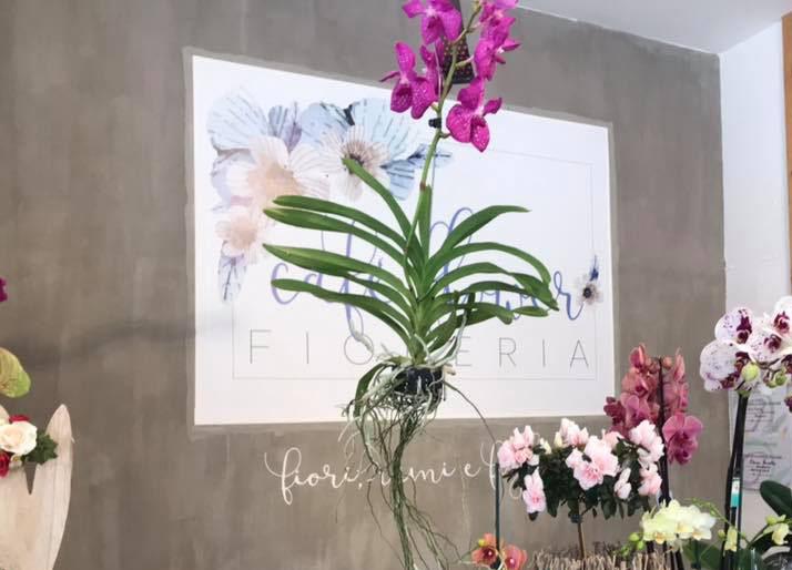 Orchideen-Neuzugang 2 - Seite 21 53813311