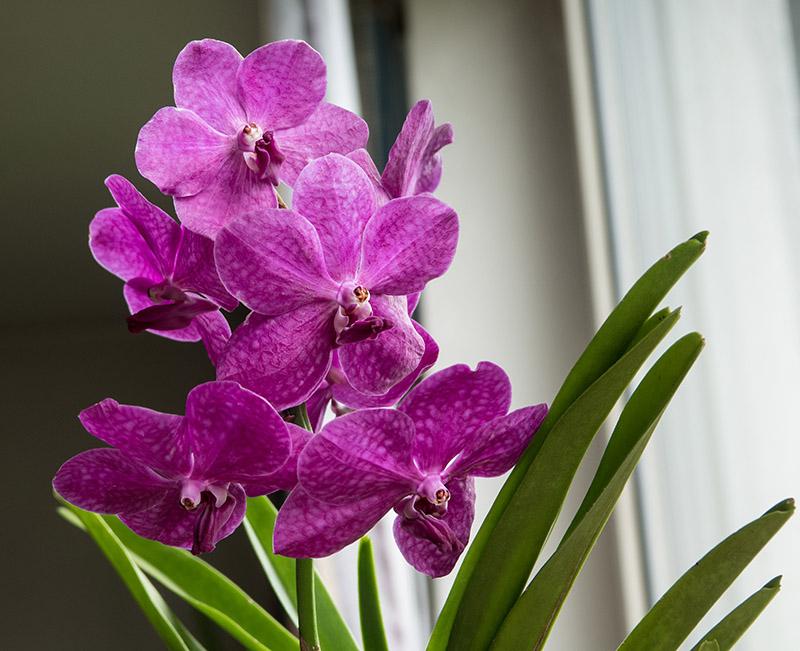Orchideen-Neuzugang 2 - Seite 32 Dsc05314