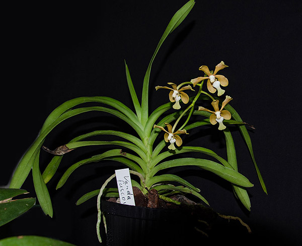 Orchideen-Neuzugang 2 - Seite 5 Dsc_0144