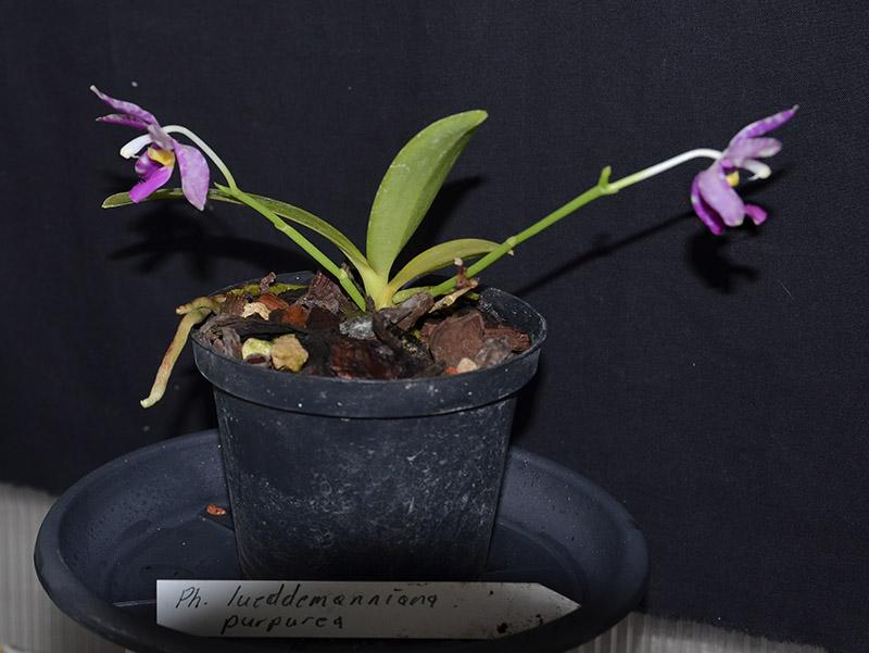 Orchideen-Neuzugang 2 - Seite 5 Dsc_0145