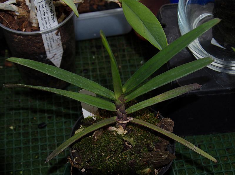 Orchideen-Neuzugang 2 - Seite 5 Dsc_0210
