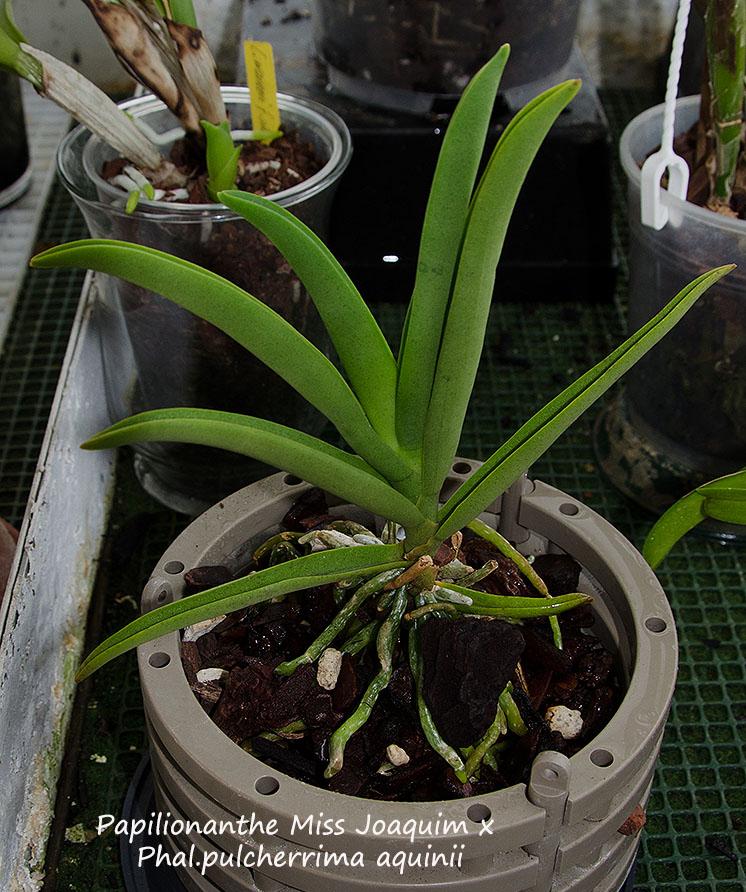 Orchideen-Neuzugang 2 - Seite 5 Dsc_0226