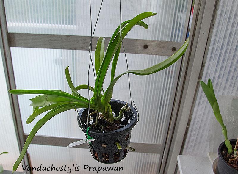 Orchideen-Neuzugang 2 - Seite 5 Dsc_0228