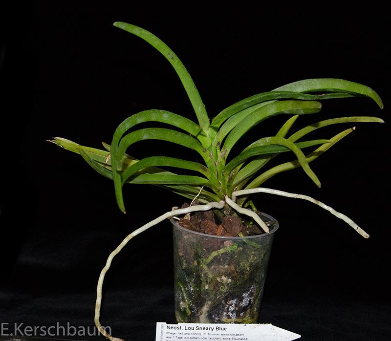 Orchideen-Neuzugang 2 - Seite 6 Dsc_0268
