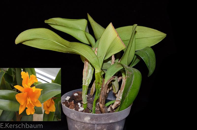 Orchideen-Neuzugang 2 - Seite 6 Dsc_0271
