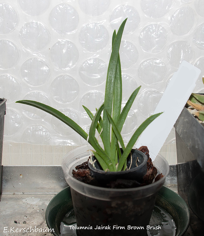 Orchideen-Neuzugang 2 - Seite 17 Dsc_0739