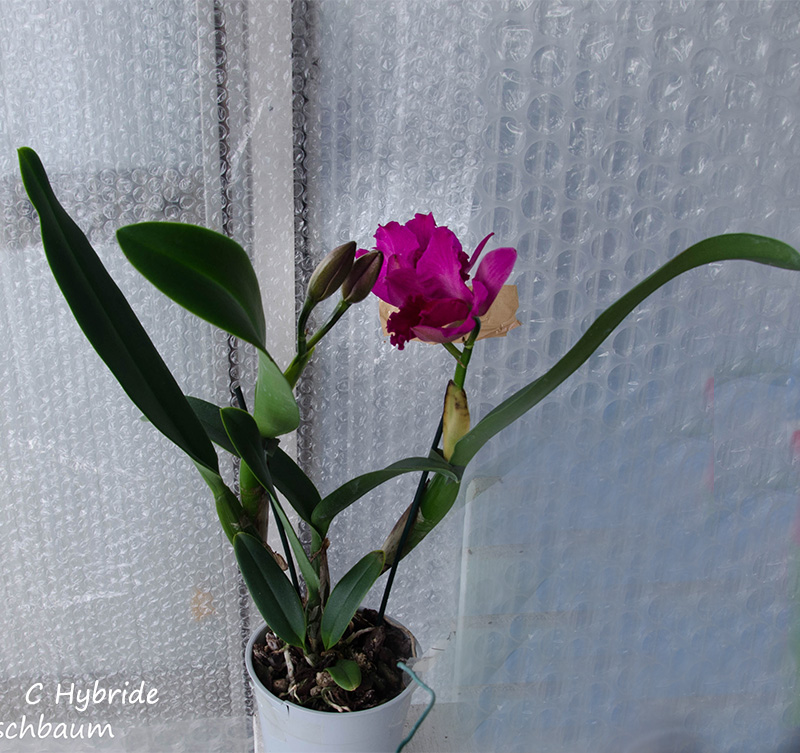 Orchideen-Neuzugang 2 - Seite 16 Dsc_4911