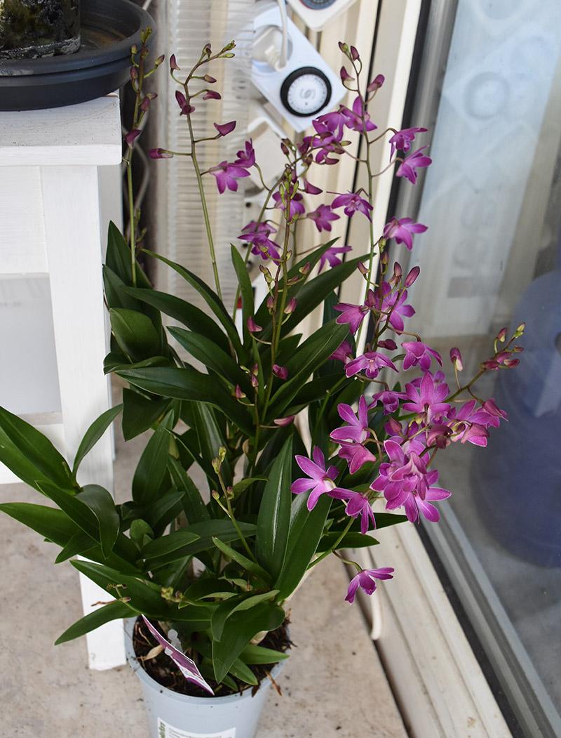 Orchideen-Neuzugang 2 - Seite 25 Dsc_9610