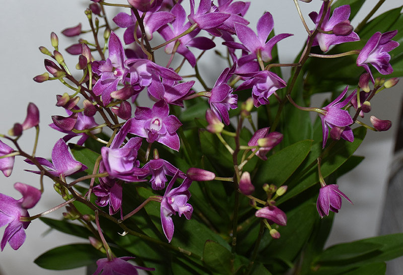 Orchideen-Neuzugang 2 - Seite 25 Dsc_9612