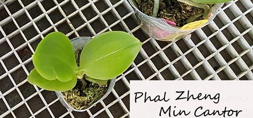 Orchideen-Neuzugang 2 - Seite 4 Phal-n15