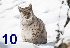 Concours du mois de décembre 2020 - Page 2 Felin-15