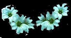 Bannières neutres 460x60 px et logos 88x31 px Fleurs11