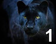 Concours du mois de septembre 2021 -  La course au chiffre 10 - Page 2 Im110