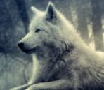 Liste d'avatars Loup-510