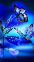 Liste d'avatars Papill10