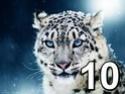 Concours du mois de septembre 2021 -  La course au chiffre 10 - Page 2 Im1010