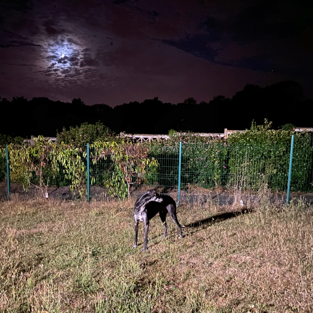 Raul ( Moro) galgo noir Adopté - Page 4 367fe610