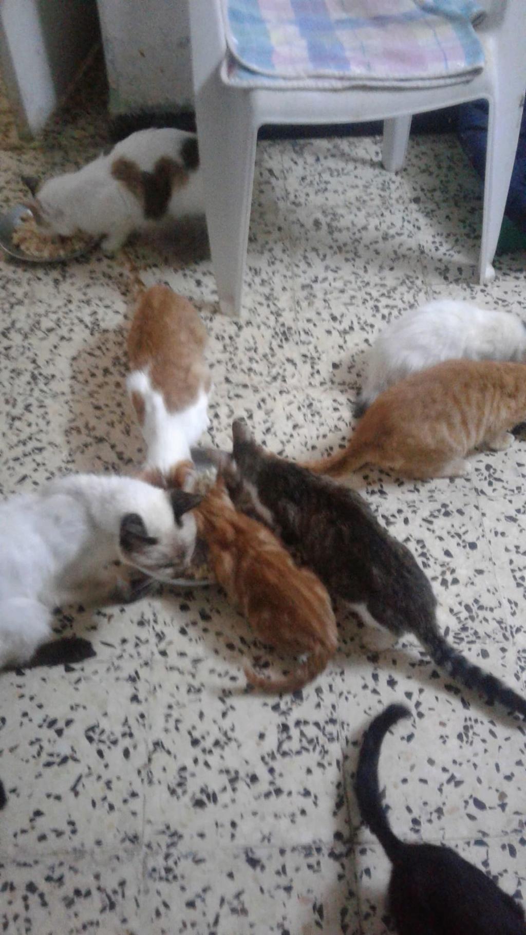 Aide CCTNA pour les animaux de HOUDA 47573810