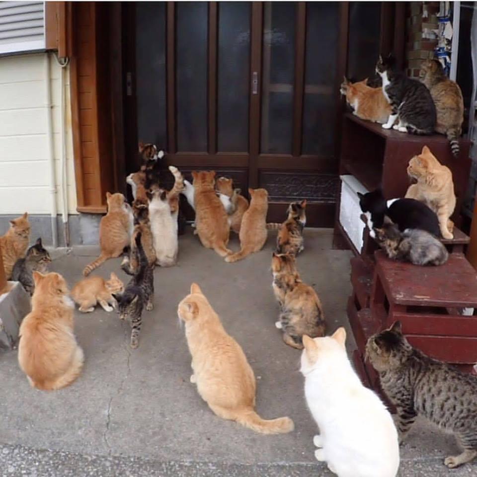 Aide CCTNA pour les animaux de HOUDA 48426810