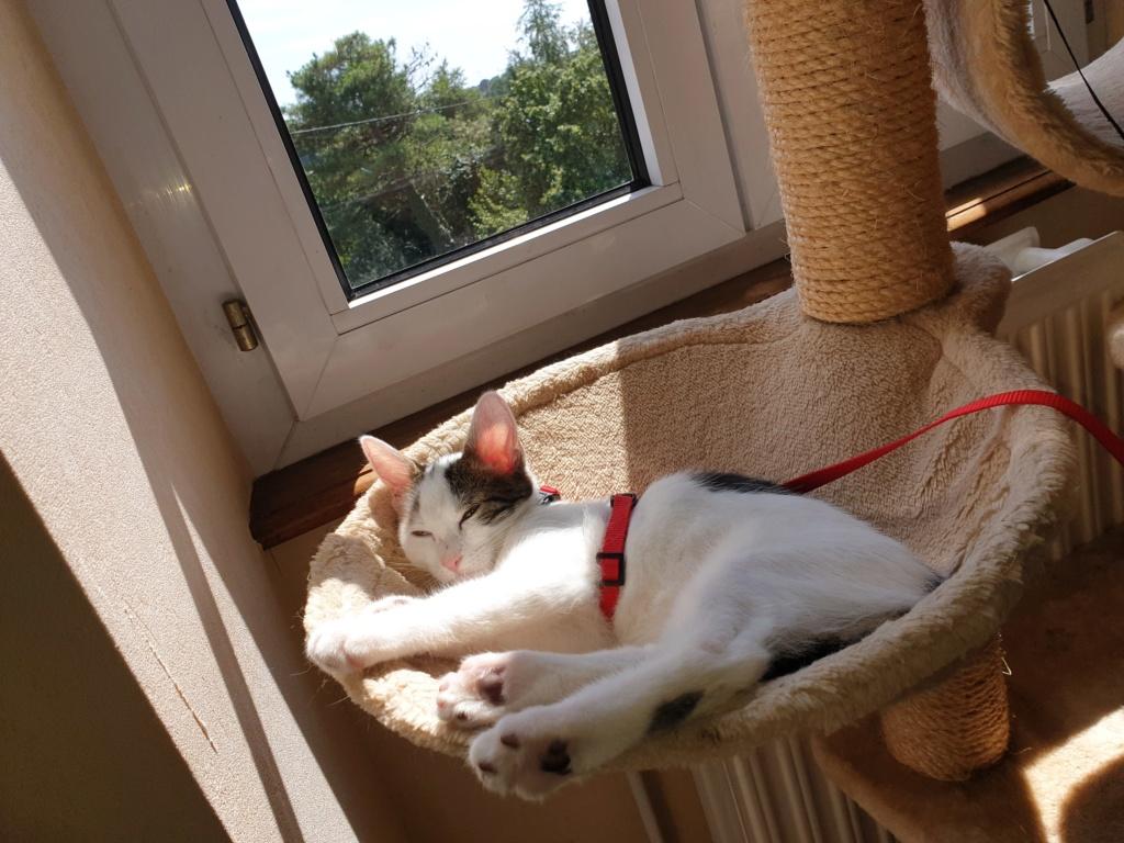 PARKER, chaton européen blanc noir tigré, né le 15/04/19  128