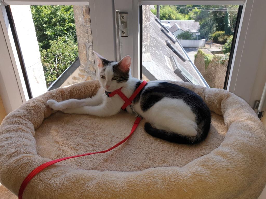 PARKER, chaton européen blanc noir tigré, né le 15/04/19  221