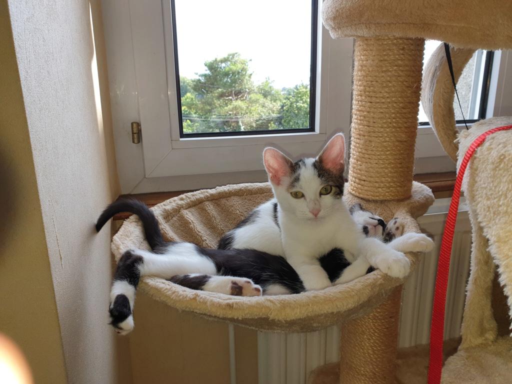 PARKER, chaton européen blanc noir tigré, né le 15/04/19  222