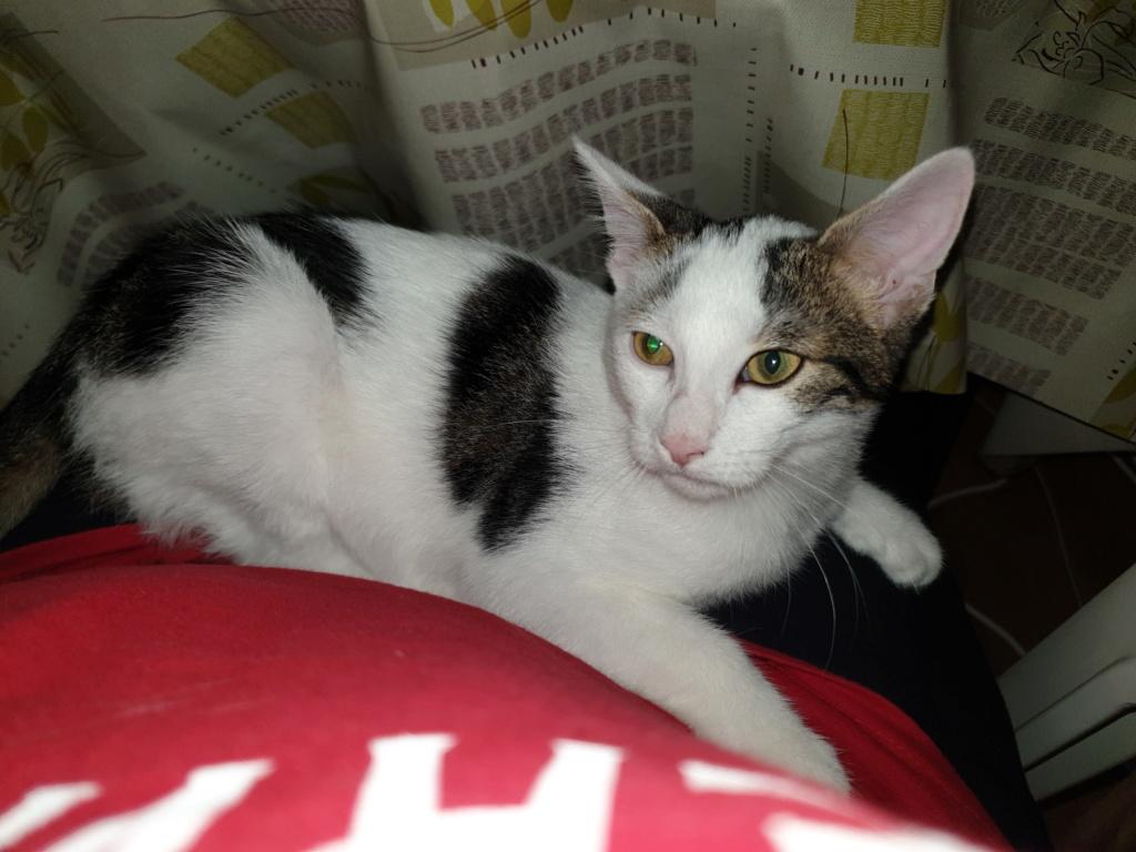 PARKER, chaton européen blanc noir tigré, né le 15/04/19  314