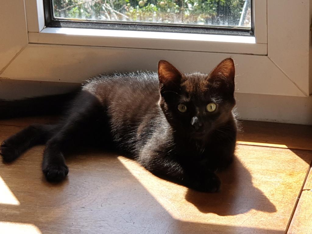 Patchoulie chatonne noire née le 24/05/2019 A14