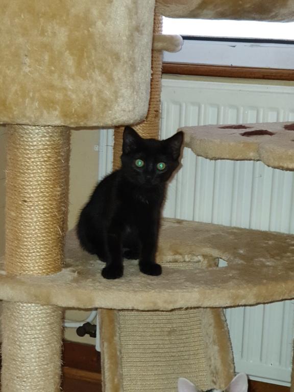 Patchoulie chatonne noire née le 24/05/2019 B12
