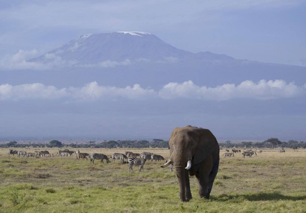 Le Kilimandjaro _dsc0110