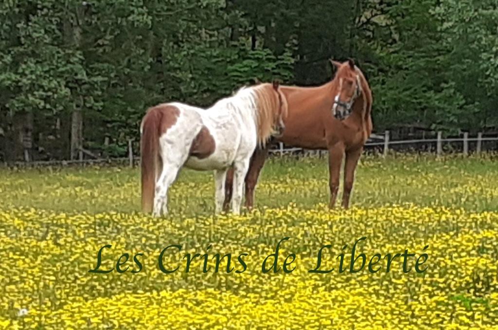 Dpt 41, 7 ans, Don Juan du Canter, hongre TF, contact Cécile 20200510