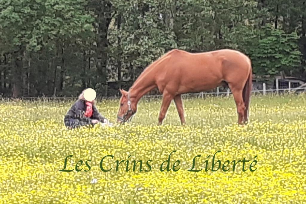 Dpt 41, 7 ans, Don Juan du Canter, hongre TF, contact Cécile 20200512