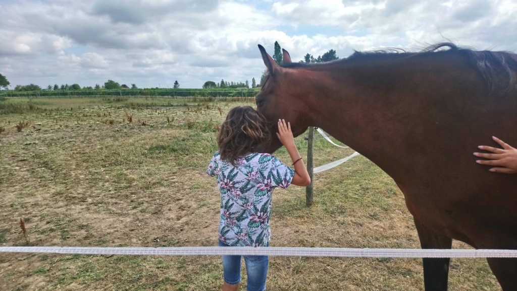Dpt 17, 9 ans, Azia du Boscail, jument TF, adoptée par Angel (Mai 2019) Dsc_0010