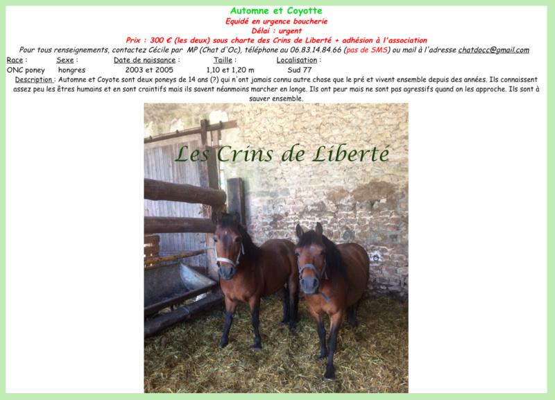 Dpt 77, 13 et 15 ans, Automne et Coyote, poneys ONC, sauvés par Marie B. (2018) Fiche_16
