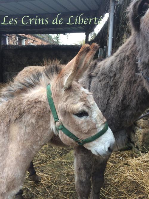 Dpt 77, 8 ans, Zampano, âne ONC, adopté par Claire (juin 2020) Img_3419