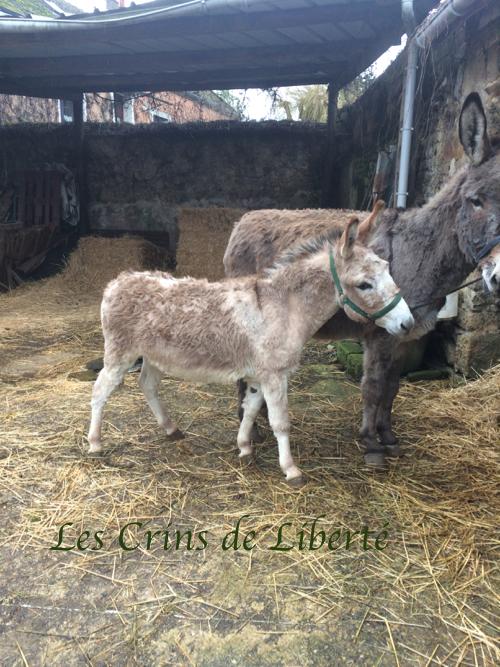 Dpt 77, 8 ans, Zampano, âne ONC, adopté par Claire (juin 2020) Img_3420