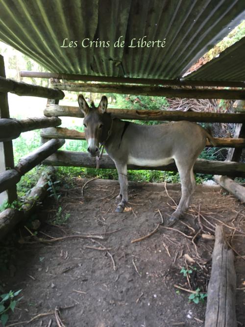 Dpt 77, Grisou, âne entier, contact Cécile Img_3714