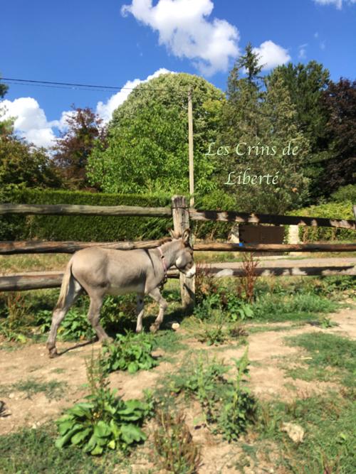 Dpt 77, Grisou, âne entier, contact Cécile Img_3715