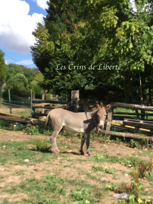 Dpt 77, Grisou, âne entier, contact Cécile Img_3716