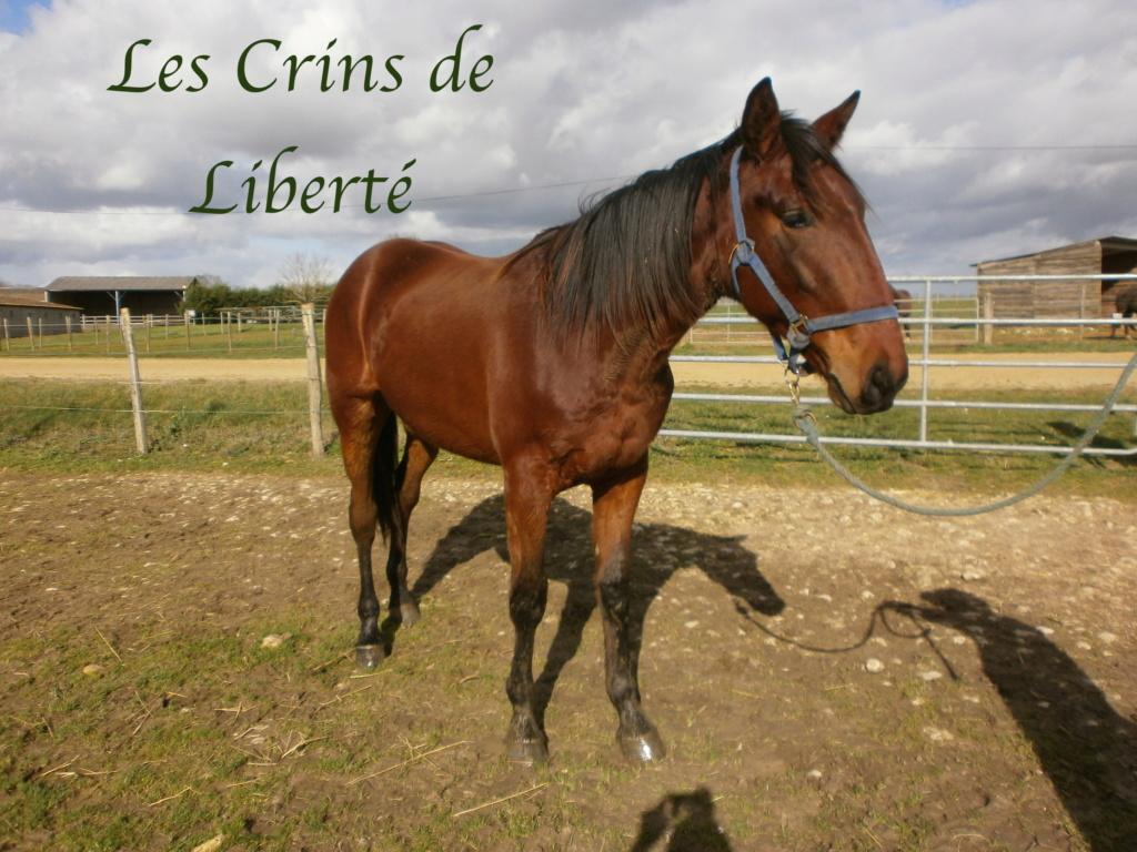 Dpt 17, 2 ans, Iaponyx de Cravans, délai 15 mars, adopté par Armony (juin 2020) P2120012