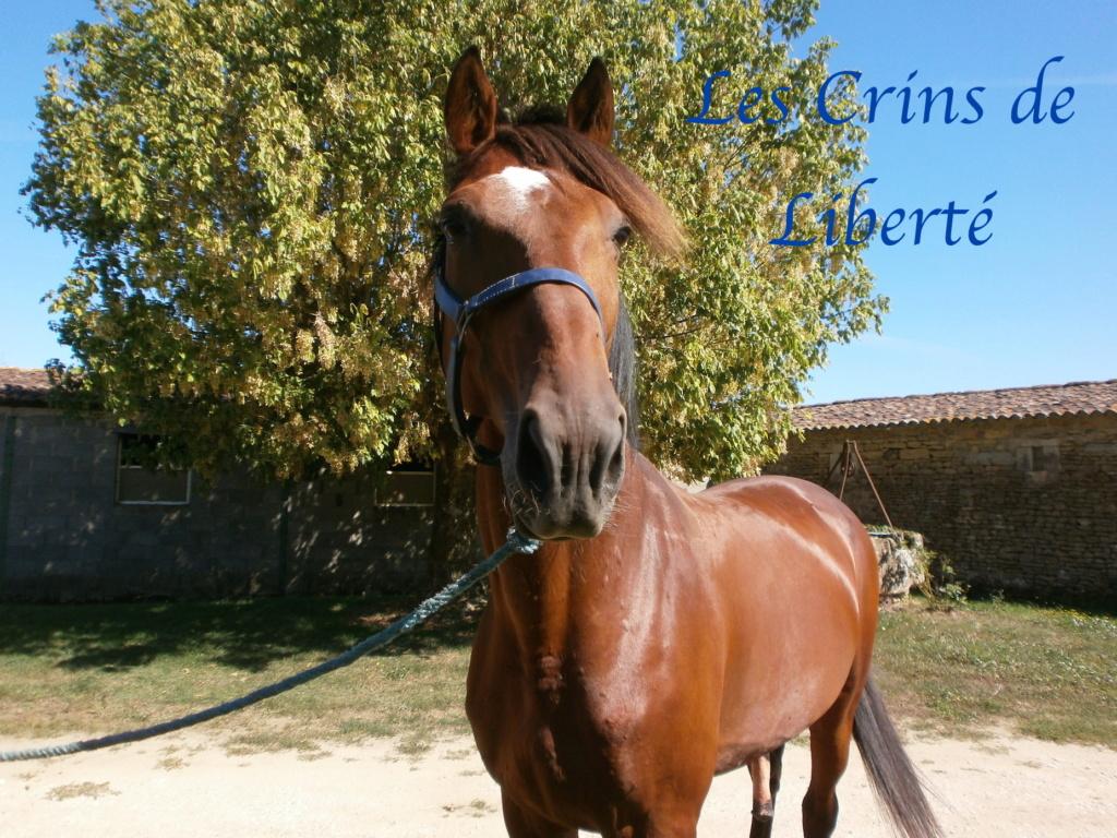 Dpt 17, 6  ans, Eden de Cravans, hongre TF, adopté par Carla (sept 2020) P9080010