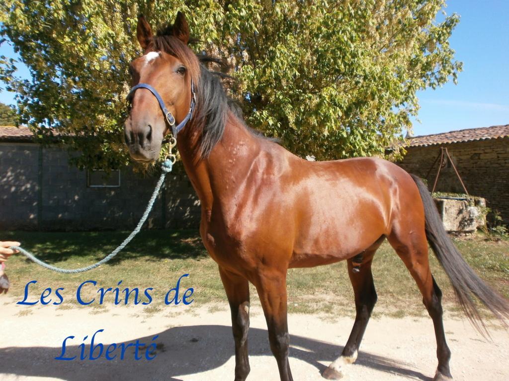 Dpt 17, 6  ans, Eden de Cravans, hongre TF, adopté par Carla (sept 2020) P9080011