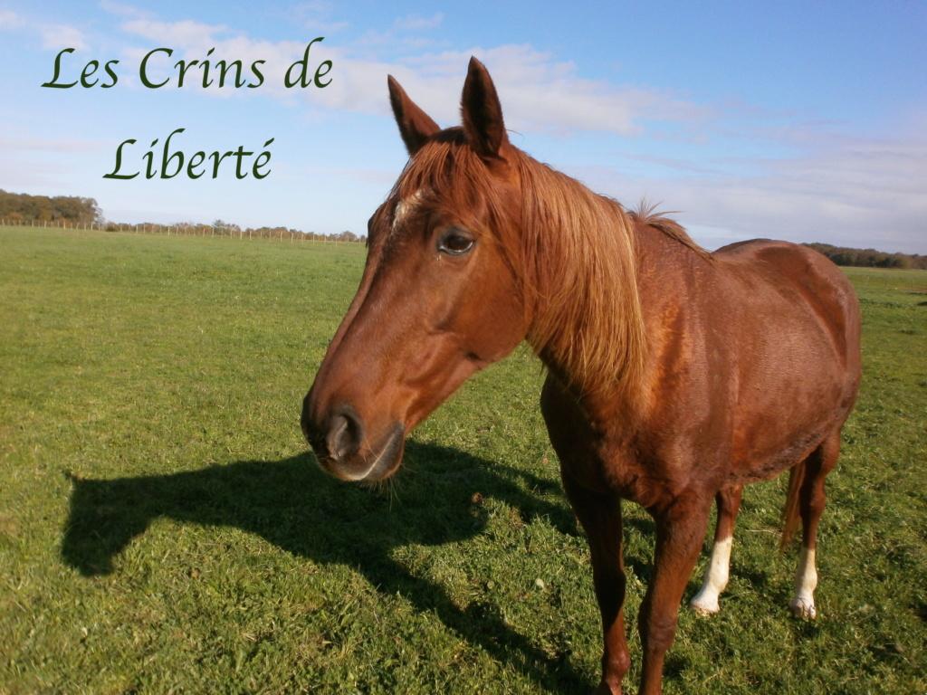 Dpt 17, 19 ans, Ninia de Cravans, jument TF,adoptée par Chloé (juin 2020) - Page 2 Pb130012