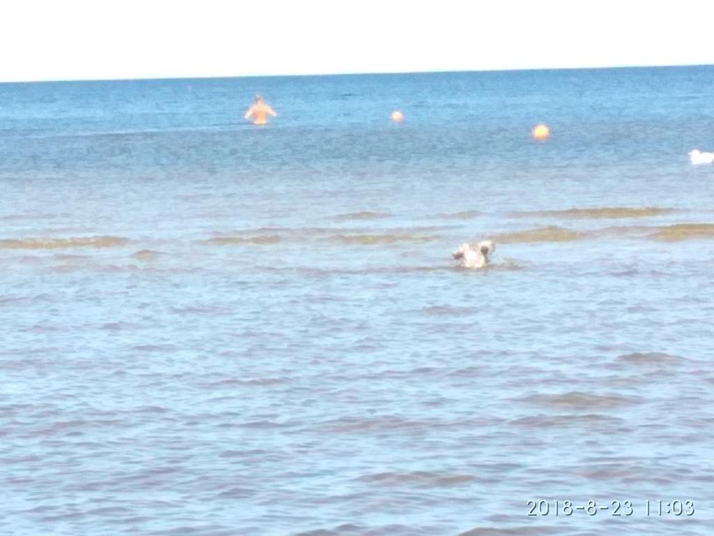 Снова с моря дунуло в середине дня...))) ( Юрмала) - Страница 3 Img_2194