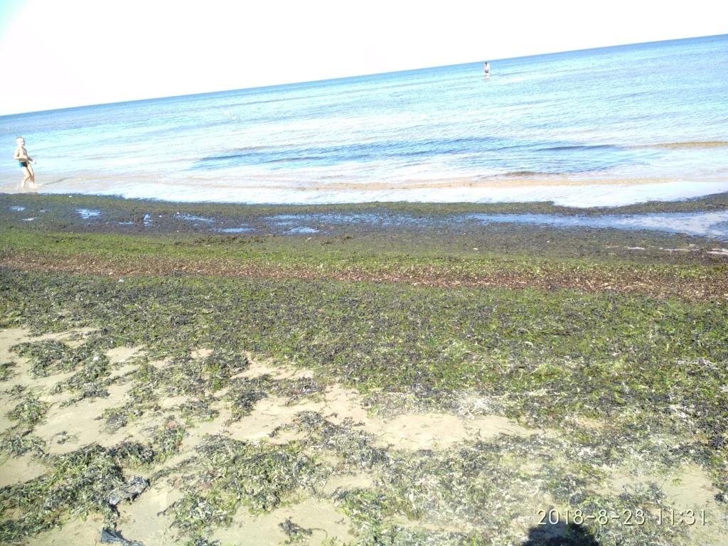Снова с моря дунуло в середине дня...))) ( Юрмала) - Страница 3 Img_2205