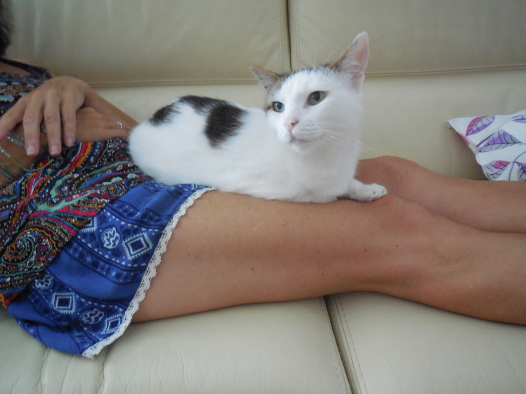 JENNIFER, chatte européenne blanche et tigrée, née en 2014. Dscn1412
