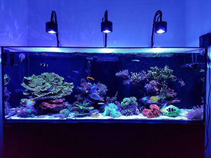 Kessil lampu aquarium 1011